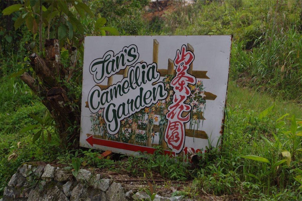 キャメロンハイランド観光椿園